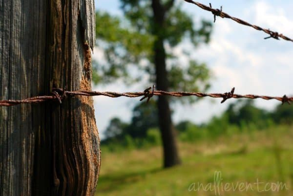 barbedwire