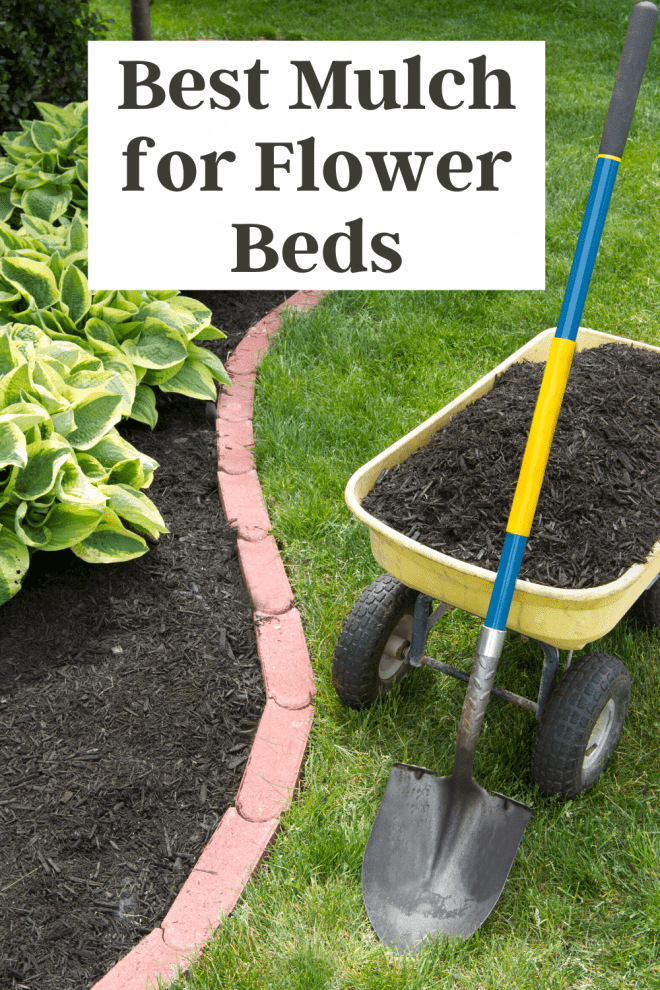 Best Mulch For Flower Beds - Hostas in flower bed, surrounded by black mulch
