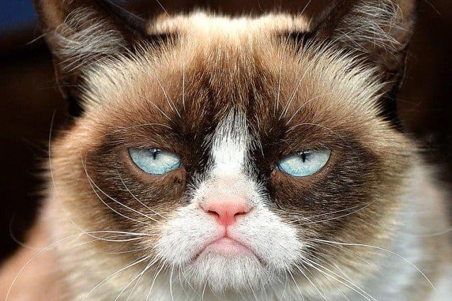 Grumpy Cat - The Pedi From Hell