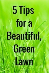 5 Tips for a Beautiful Green Lawn