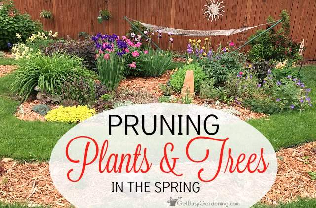 Pruning Your Plants and Trees in the Spring