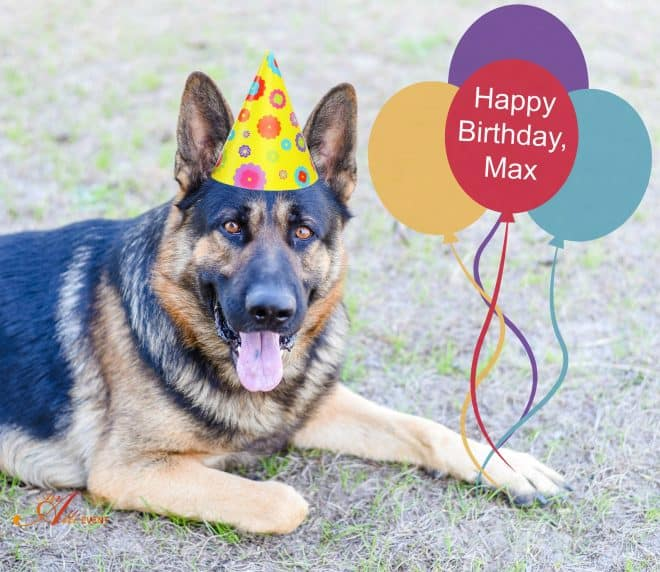 Surprise Birthday Party for Your Dog