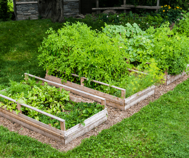 raised garden beds full of plants