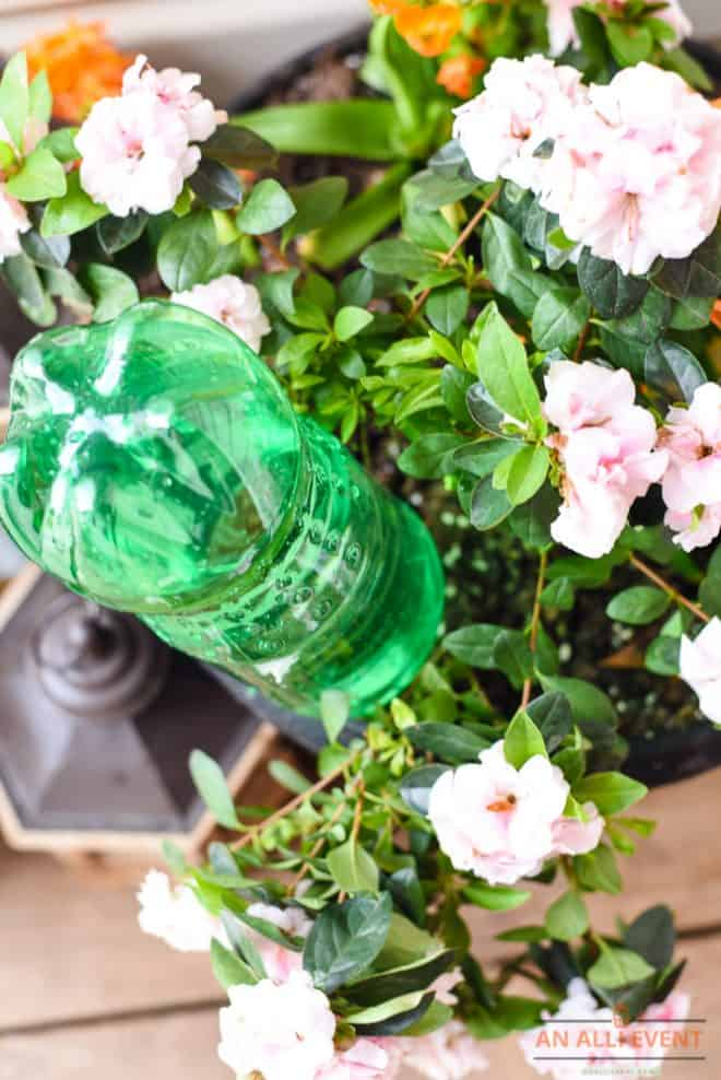 Self-Water Container Plants While On Vacation