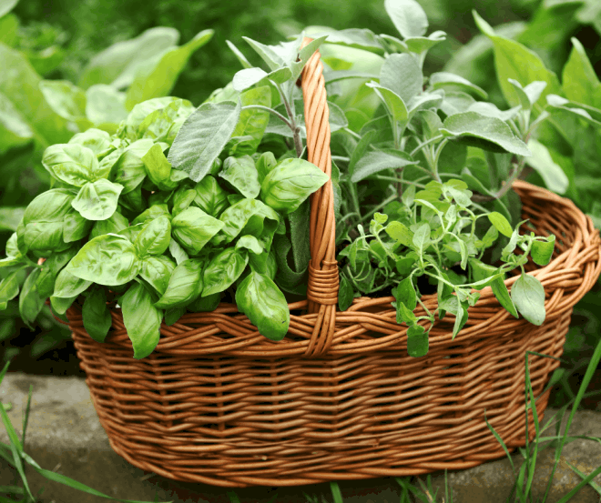 Tips on How to Grow a Herb Garden