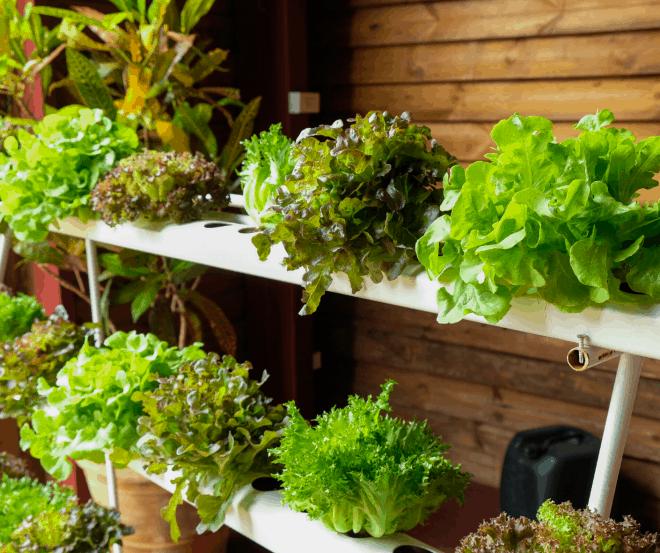 Hydroponics - Indoor Gardening
