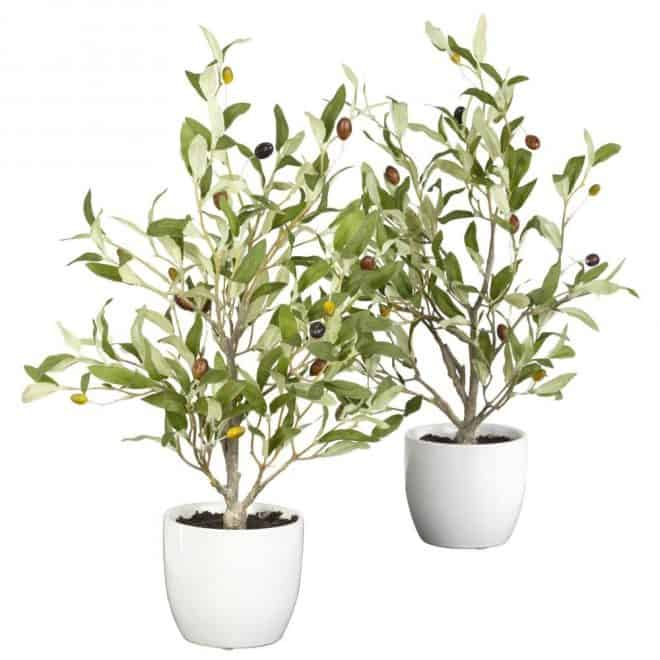 two faux olive trees in white planters